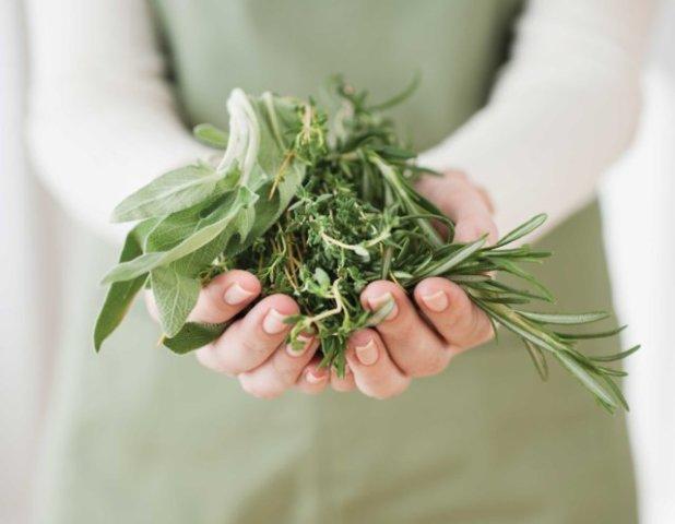 Лекарственные травы в ладонях